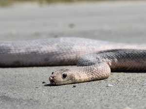 DANGER: Deadly snakes washing up on beaches