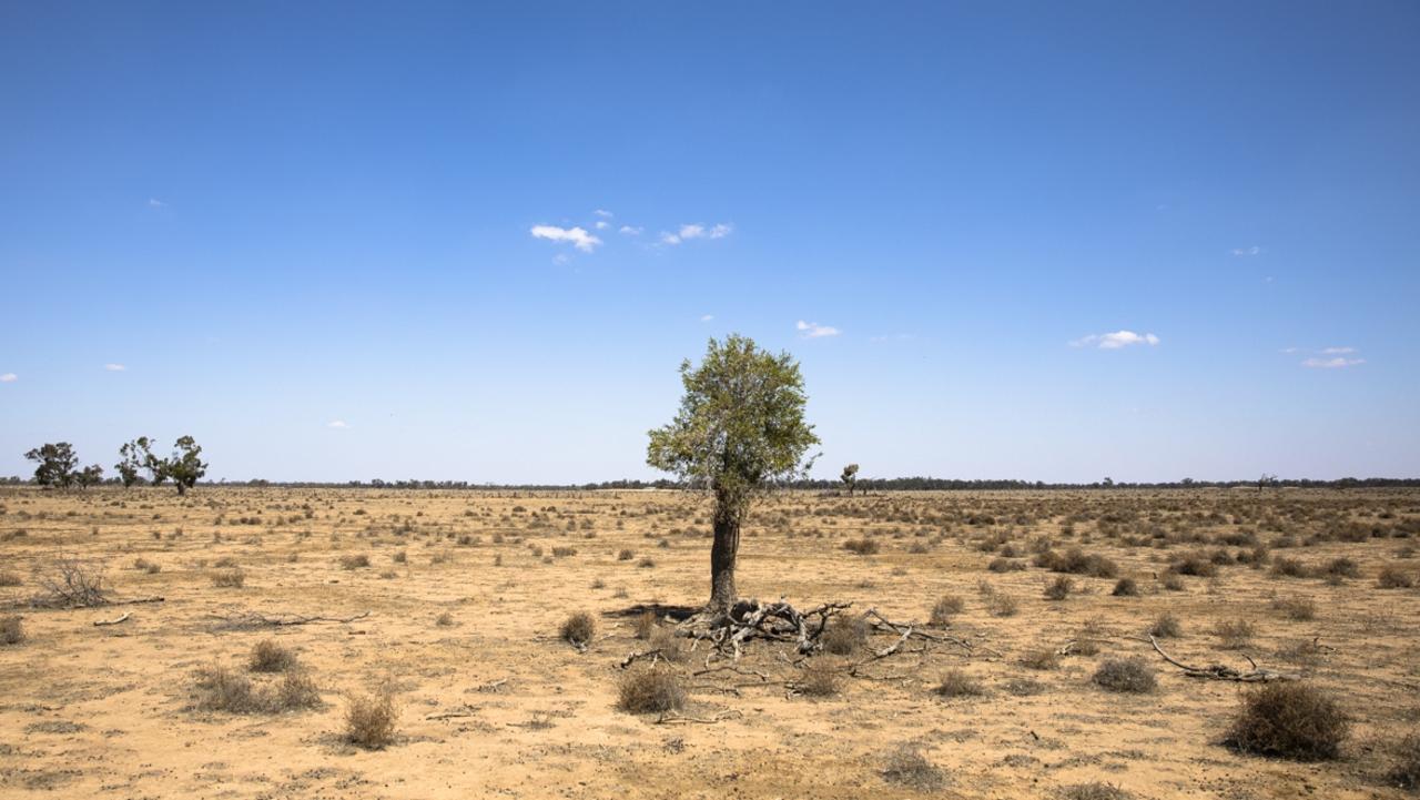 Drought-ravaged Warren. Photo: Krystle Wright
