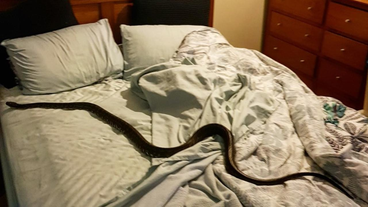 UNWELCOME GUEST: A Sunshine Coast woman got the fright of her life when she found a snake in her bed.