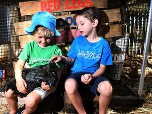 Kindergarten's stolen chicken should ruffle feathers