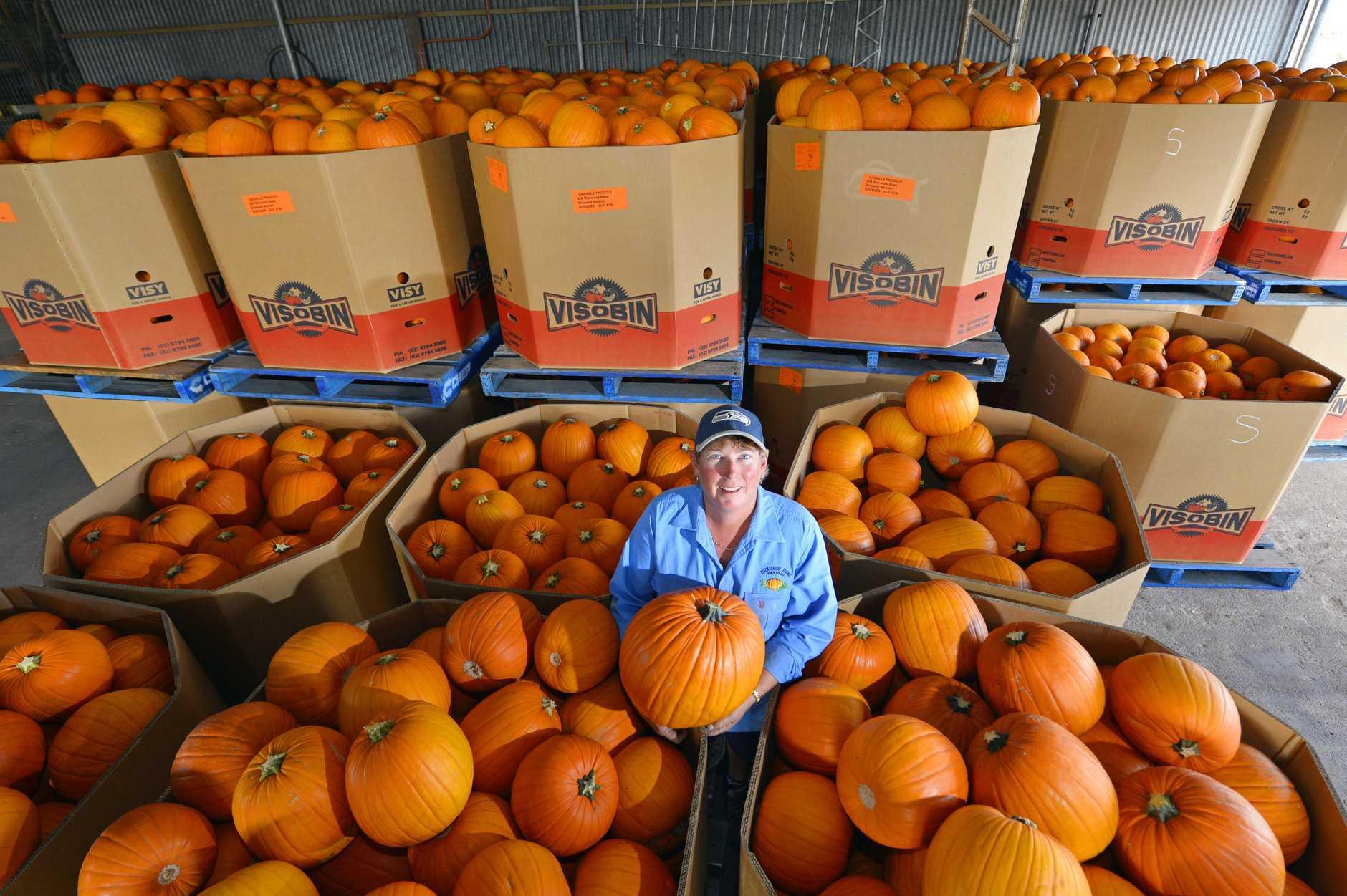 CARVING UP: Queenslanders can carve their own Halloween pumpkins grown in their home state by Bowen based Stackelroth Farms pumpkin grower Belinda Williams