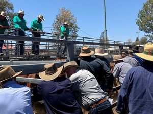 Top quality on show for inaugural Beaudesert sale