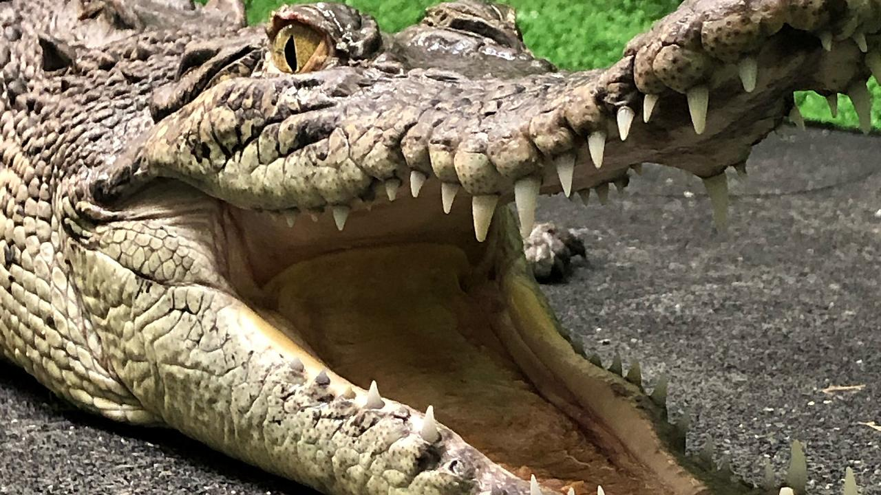 Was it a crocodile spotted off Fraser Island or just too much rum?