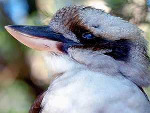 Opinion: 'No cruelty to birds can be justified'