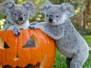 Furry friends say 'boo' at the zoo for spooky season