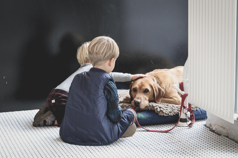 Gentle-natured dogs love the little ones. Source: Sabina Fratila, Unsplash