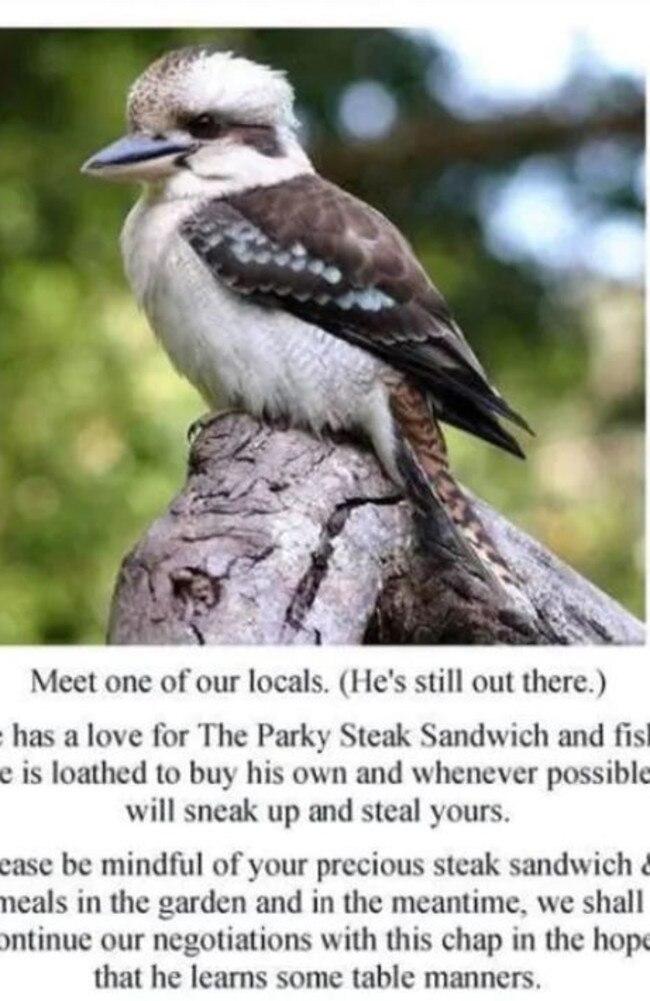 Kevin the kookaburra was beloved by locals.