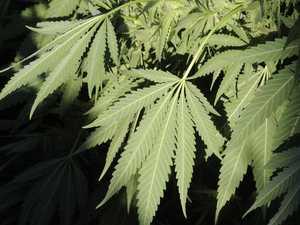 Man starts growing marijuana to self-medicate