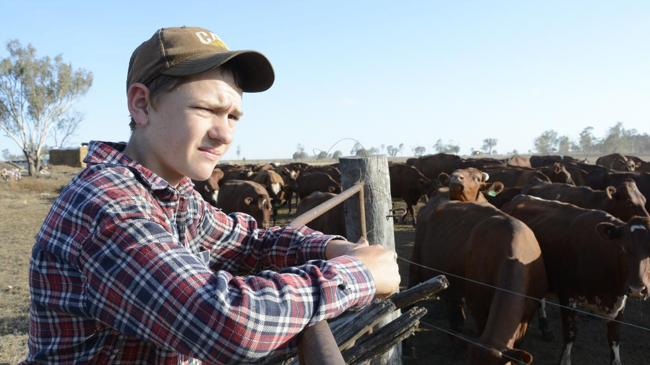13-year-old Alec Weick works late in the evening each night to help his parents at their Oakey dairy farm.