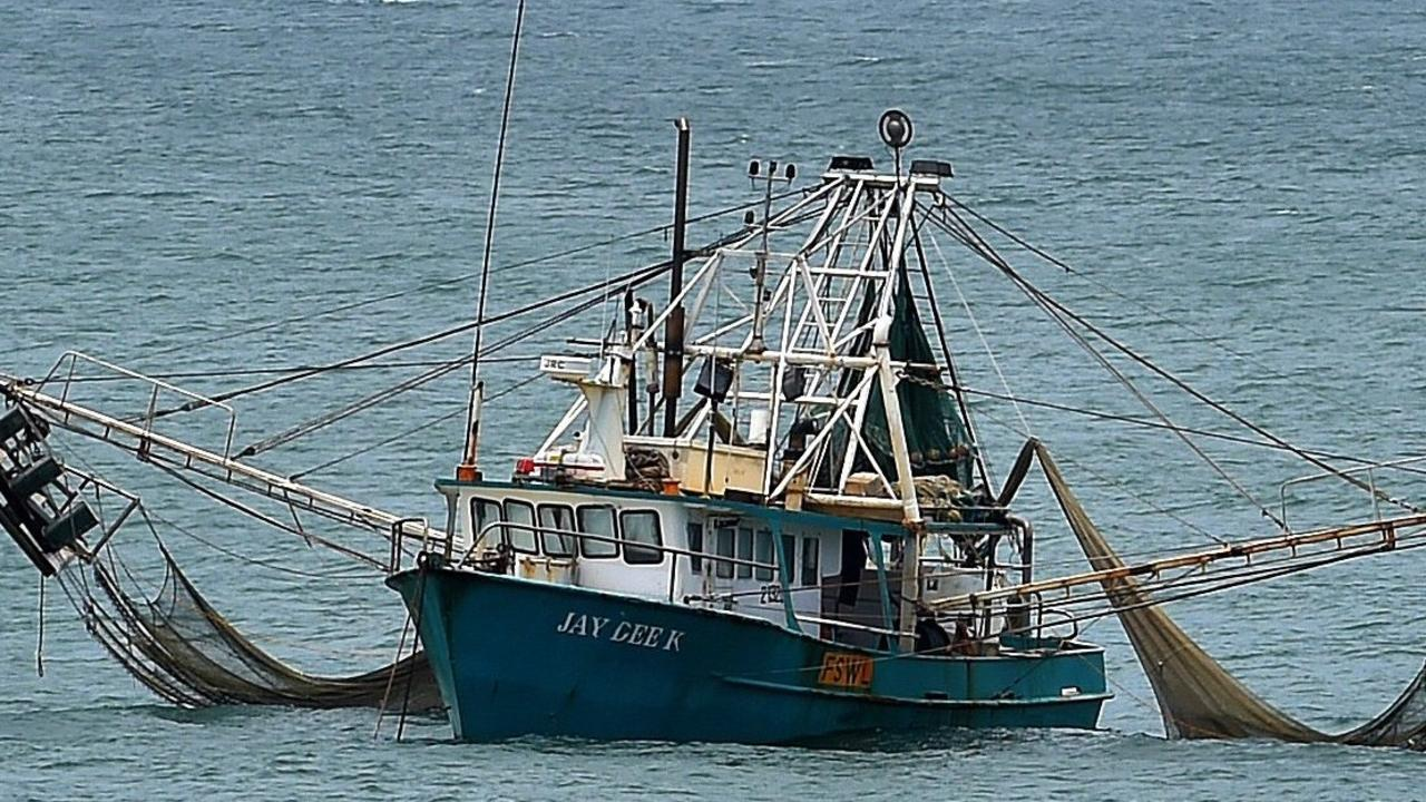 Sharks are often seen behind fishing trawlers.