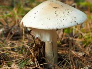 Warning over death cap dangers after child falls sick