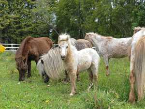Ponies escape a raging fire - now they need new homes