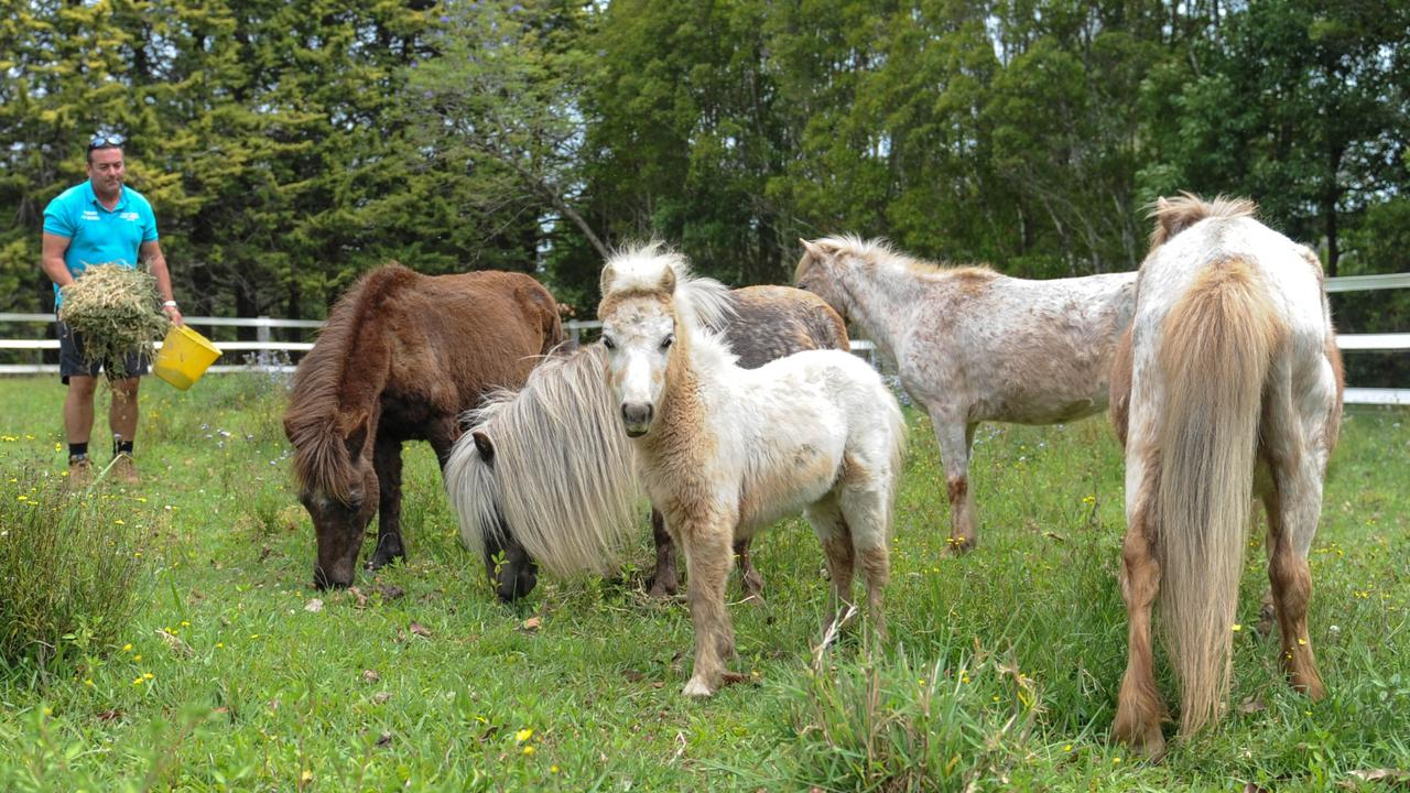 13 of the rescued horses are at Tarraray Pet Retreat and looking for their new homes.