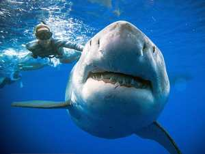 Urgent action needed to stop sharks killing tourism