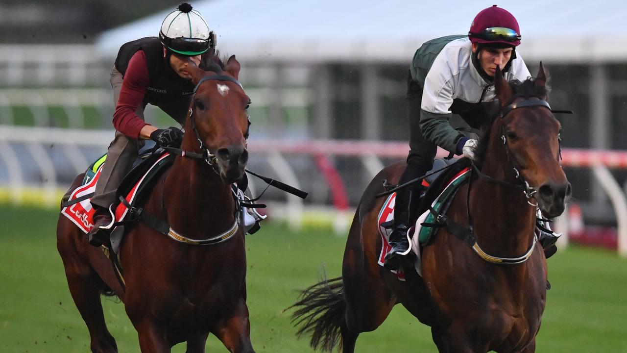 Melbourne Cup hopeful Constantinople (right) gallops at the Valley last week with stablemate Harlem. Picture: AAP
