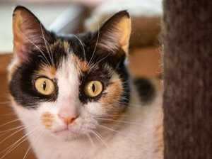 Disturbing letter sent to Gympie region cat owners