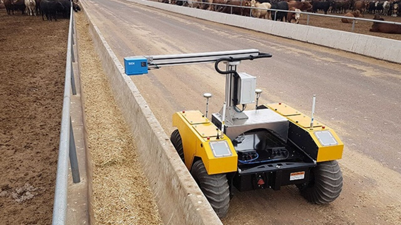 BunkBot hard at work at the Mort and Co Pinegrove feedlot. The robot scans feed troughs to predict how much grain cattle are eating.