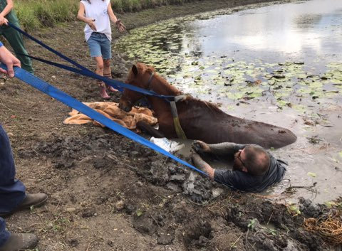 Members of the Brunswick Valley Volunteer Rescue Association rescued a horse stuck in mud at Myocum.