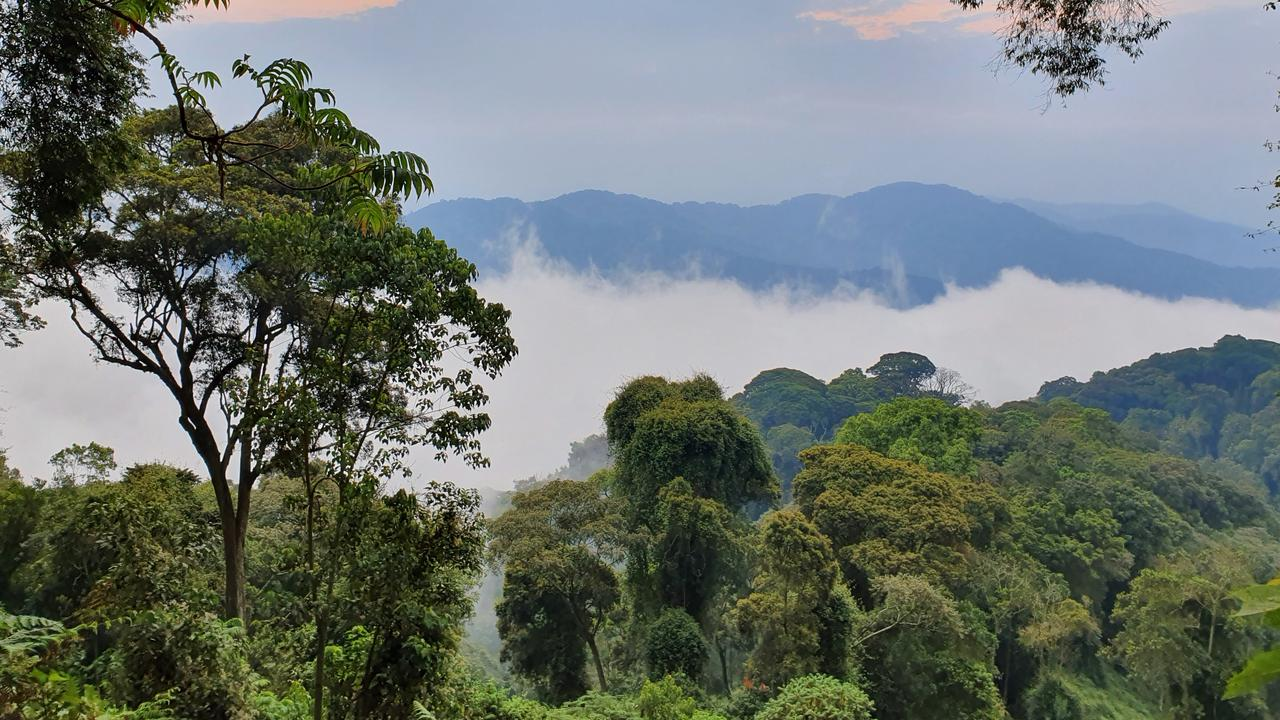 Rwanda, also known as Land of a Thousand Hills, boasts beautiful national parks and a range of wildlife. Picture: Kate Webster