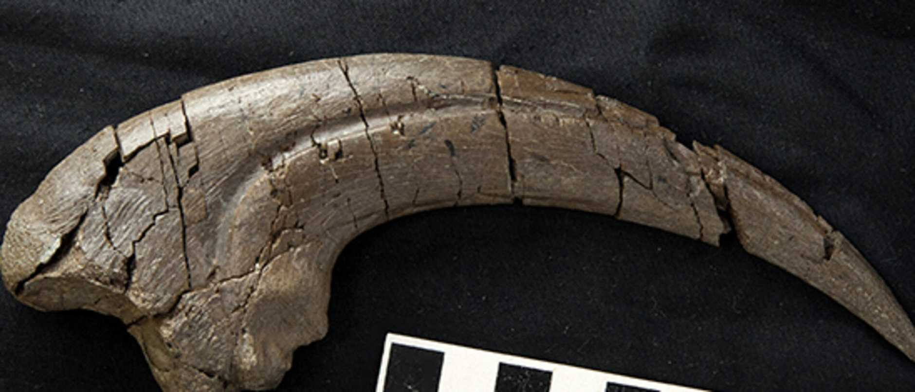 The bones we have found there in the last decade have been some of the best.