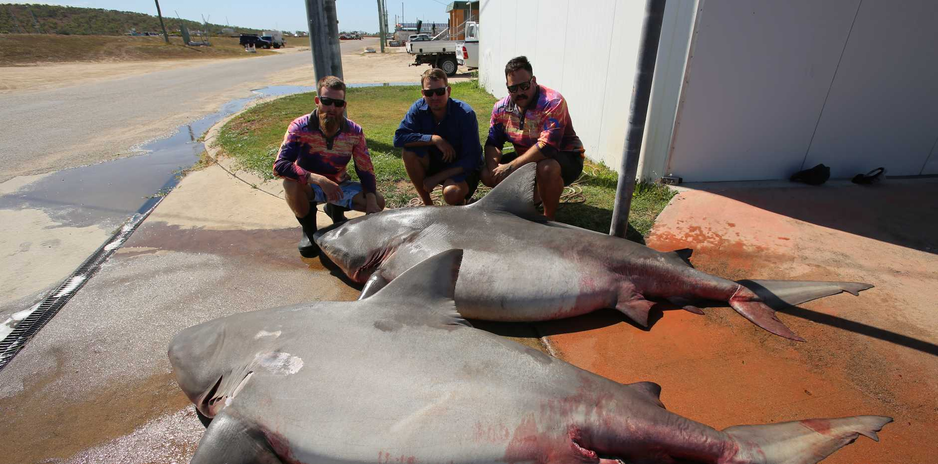 Commercial net fisherman Nathan Rynn, Travis Rynn and deckhand Jaii Wagner next to a 3.1m and a 2.9m bull sharks.