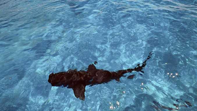 Disturbing find inside shark's stomach