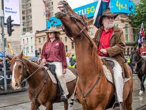 Greens in push to stop Melbourne Cup parade over 'cruelty'