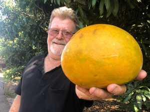 That's not a mango - it's a tastey frankenfruit