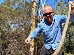 Snake catcher's 'biggest ever' brown snake find