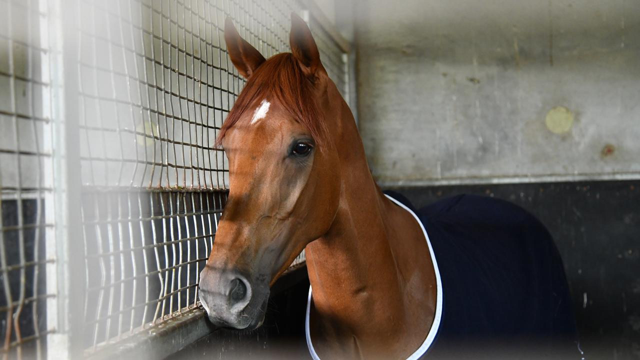 Who knew a racehorse would stir up xenophobia debates? Picture: AAP/Vince Caligiuri