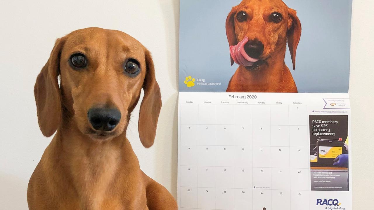 CALENDAR GIRL: Daisy is Miss February for the 2020 RACQ calendar