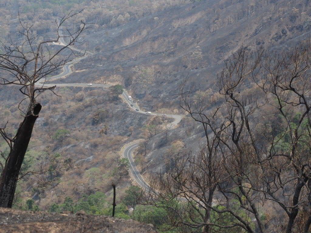 Eungella Range charred by the 2018 bushfires.