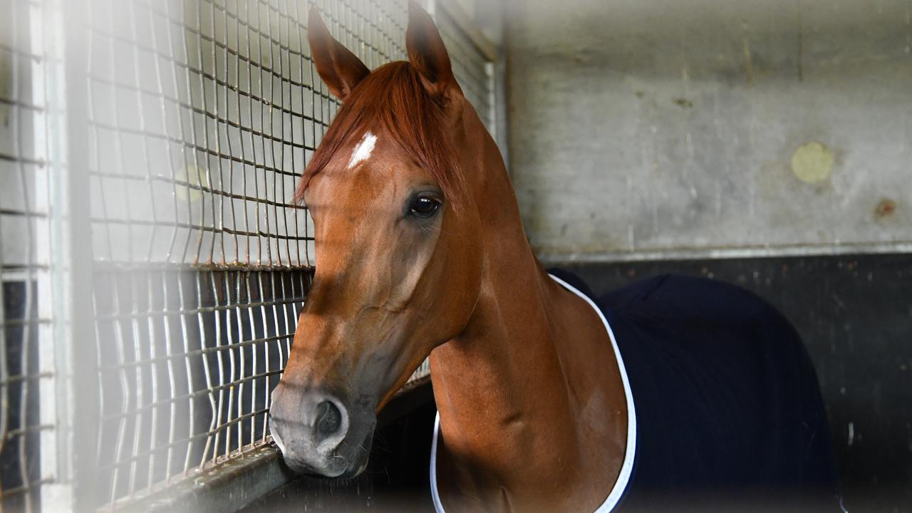 Vow And Declare is seen in his box following his victory in Tuesday's Melbourne Cup, at Danny O'Brien Racing's stables in Melbourne, Wednesday, November 6, 2019. (AAP Image/Vince Caligiuri) NO ARCHIVING