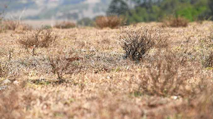 27 photos that reveal just how dry it is around Lismore