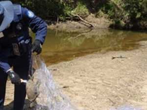 Eagle, turtles and fish found dead in illegal nets