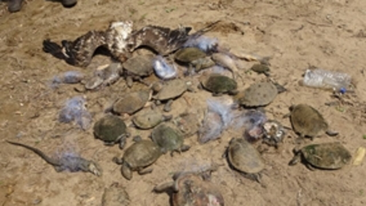 Some of the animals that died in the illegal nets found in the Logan River.