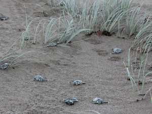 Watching out for turtles this nesting season