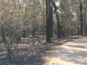 First look in Noosa Banks fire zone