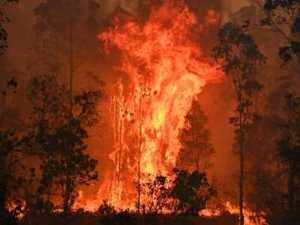 'Despicable': Row erupts over bushfires