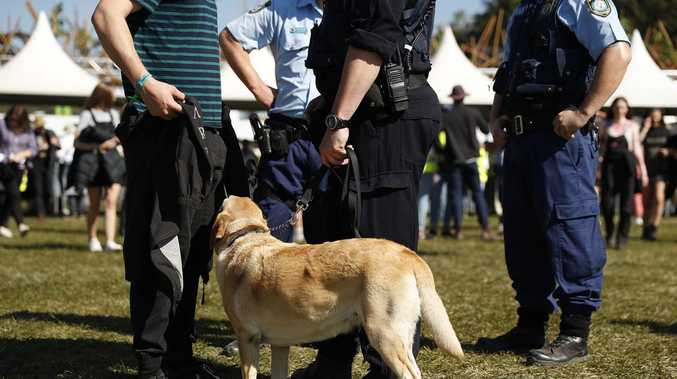 Ambos push for pill testing at festivals