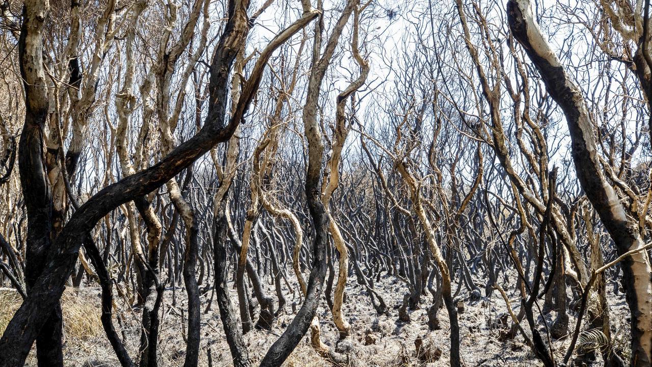 Burnt out vegetation near the scene of ignition point of the Peregian Beach bushfire. Photo Lachie Millard
