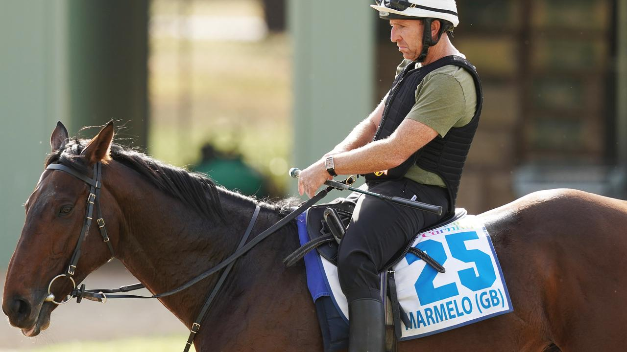 Vets ruled out Marmelo from this year's Melbourne Cup. Picture: AAP