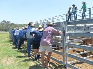 Around 50 cattle producers attended Tuesday's Sarina