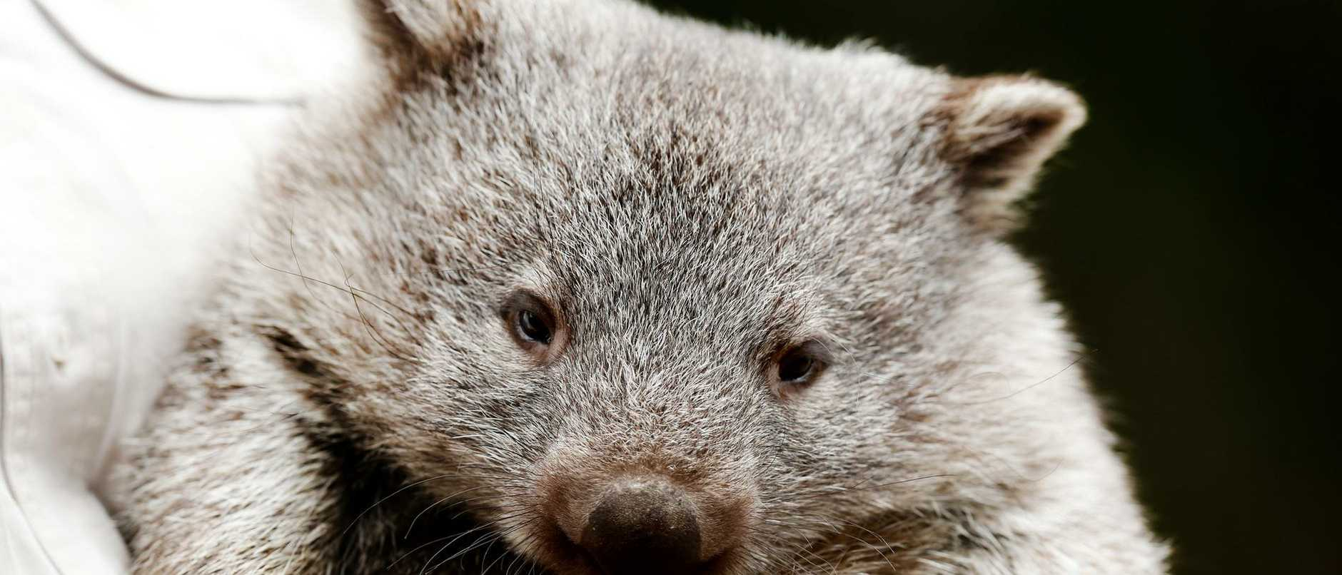The decision to cull was also criticised by local Indigenous tourism operator Quenten Agius, who said people travelled long distances to see the colony.