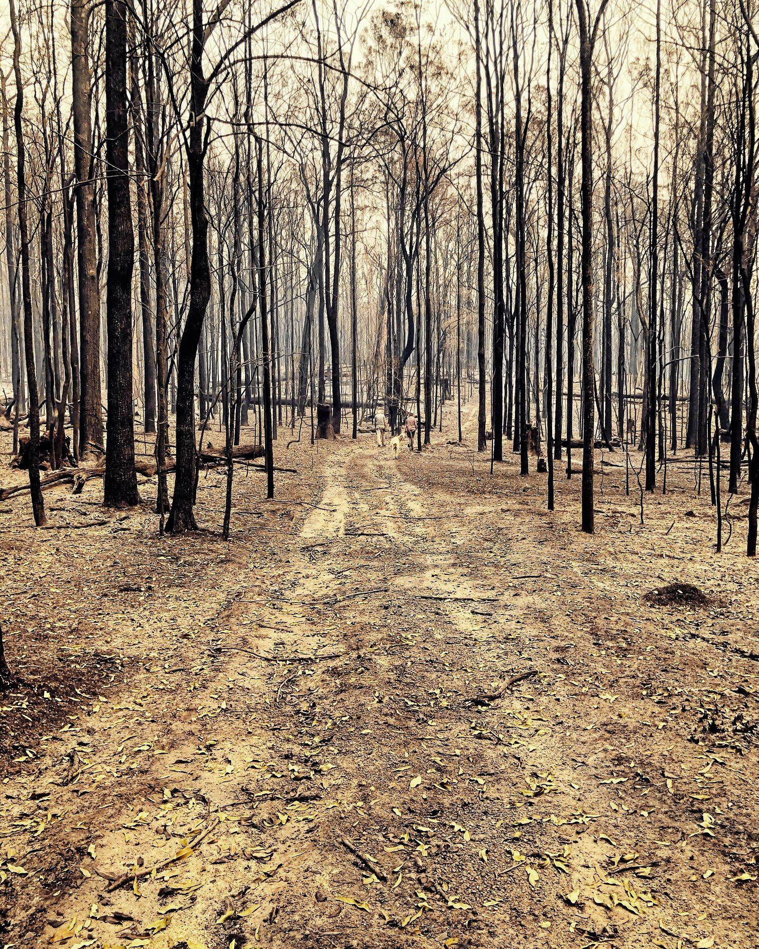 The Liberation Trail fire devastated the landscape around the Orara Valley.