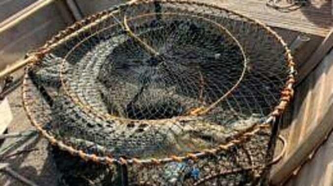 CROC POT: Fisherman finds two salties in his pots