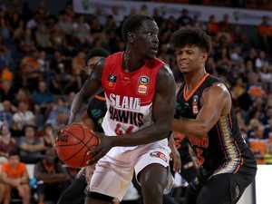 Taipans look to bounce back in the Stoush