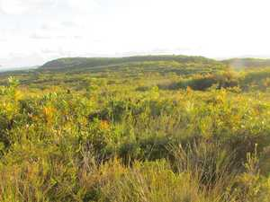 Learn about our spectacular heathlands