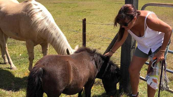 Little Charlie wasn't horsing around, he saved the day in Noosa fire