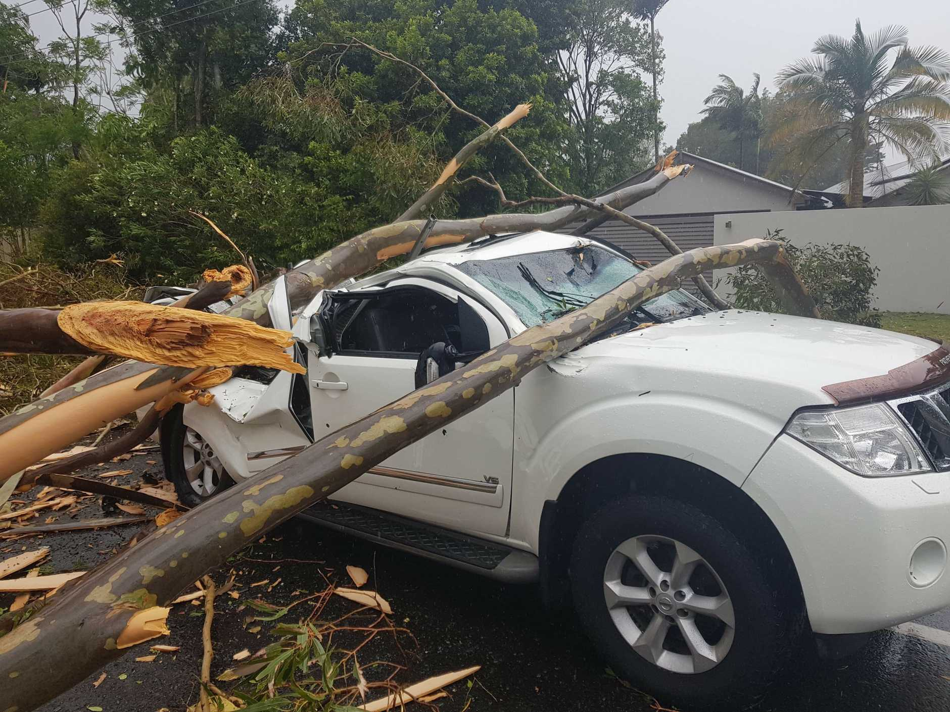 A fallen tree has crushed a car at Buderim. Photo: Sally Waghorn.